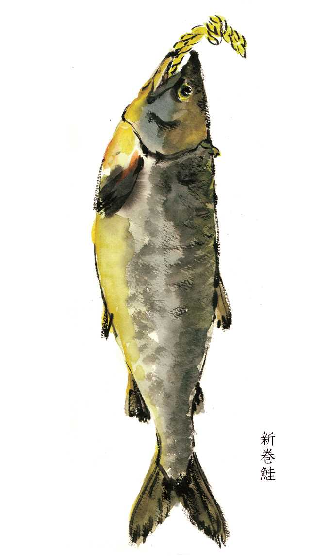新巻鮭,水彩画,イラスト,鮭,魚,素材,食材