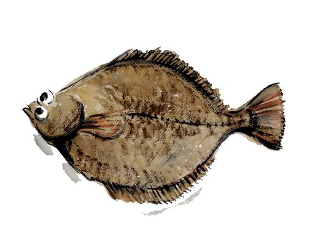 ヒラメ,魚介,水彩画,素材,食材