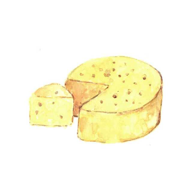 チーズ,北海道,食べ物,高塚由子,Yoshiko,Taaktsuka,水彩画,Watercolor,イラスト
