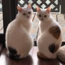猫 猫がつぶやく猫川柳 とても癒される 100歳まで颯爽と歩けて ミニマリストになりたい 健康と断捨離を追求 研究