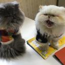 ブログ「ハッピー猫とロハス村 〜(写真倉庫  終了です)ありがとうございました」
