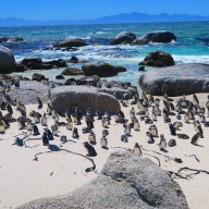 11/27 capetown🇿🇦south africa***Cape of Good Hope&Boulders Beach